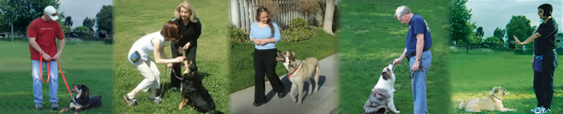 Pat Holeman, Build the Bond Dog Training with Pat Holeman Bellingham WA